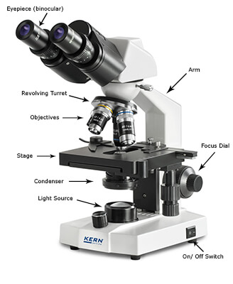 OBS Compound Microscope Labelled Diagram